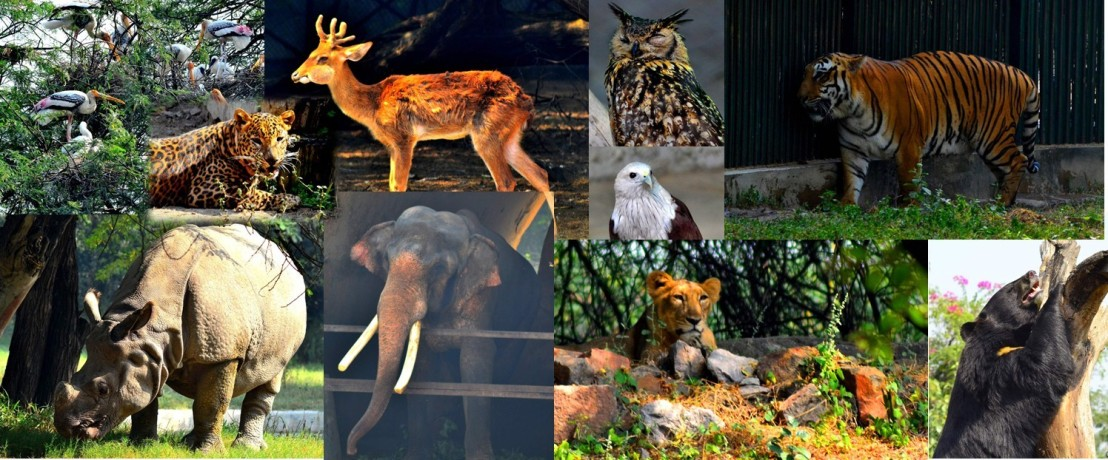 delhi_zoo_animals